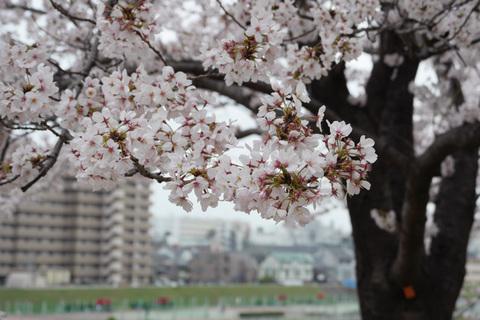 arasaku02.jpg